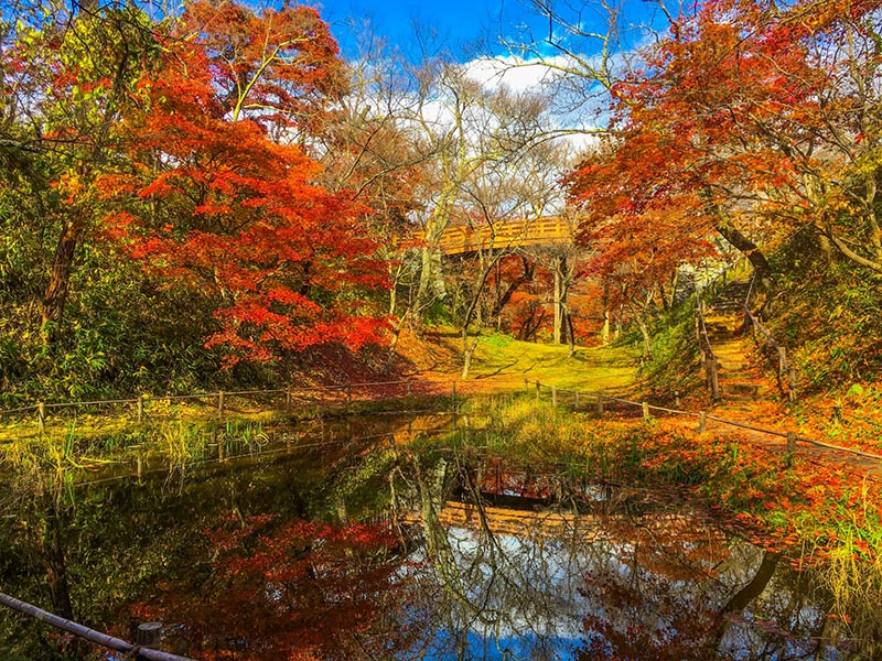 秋天的高遠城址公園