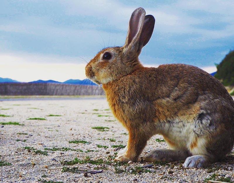休暇村的兔子