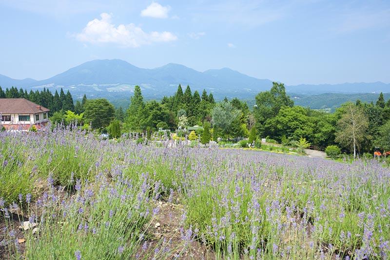 蒜山香草花園Herbill
