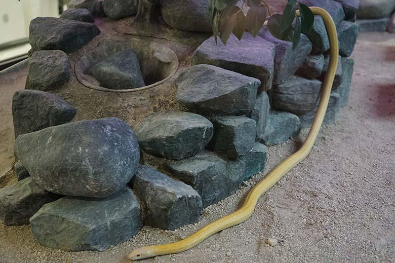 岩國白蛇館