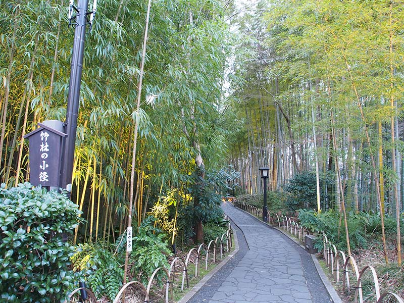 竹林小徑的入口