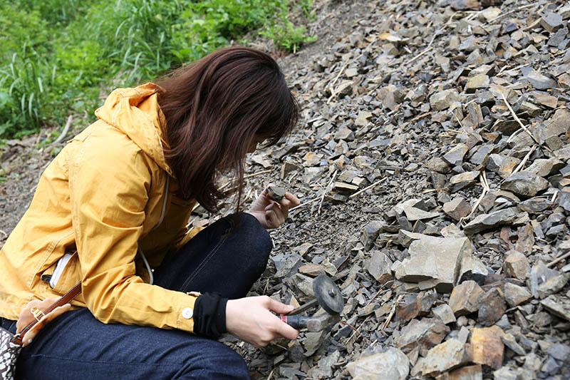 化石挖掘體驗