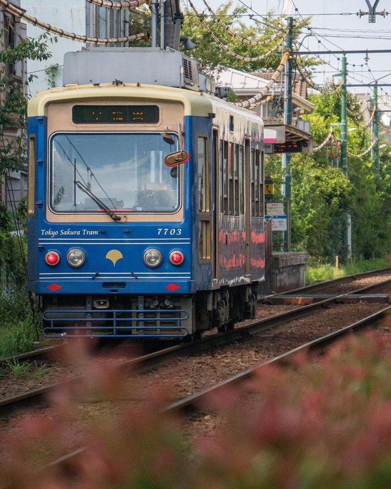 東京櫻花路面電車