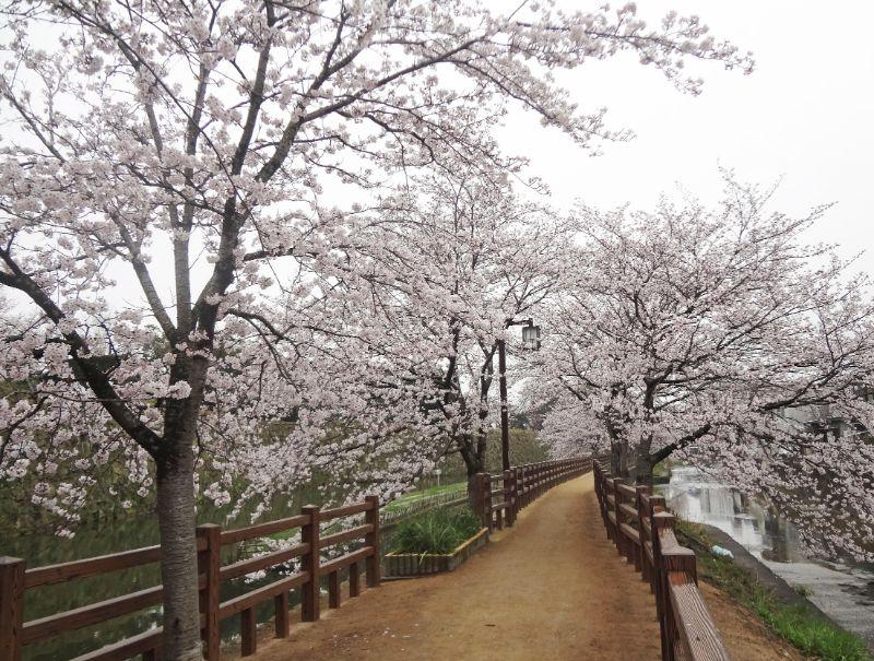 千姬牡丹園的小路