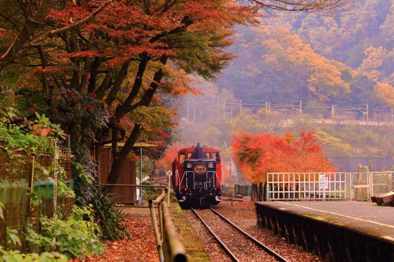 在秋天搭嵐山小火車賞楓
