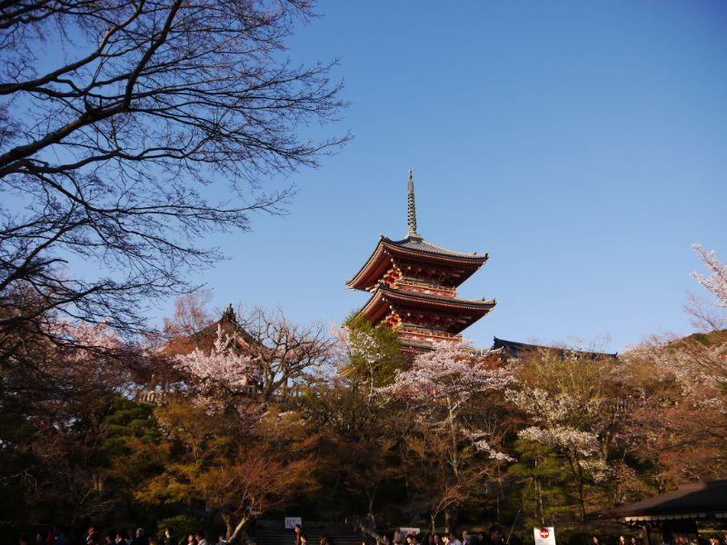 清水寺三重塔與櫻花