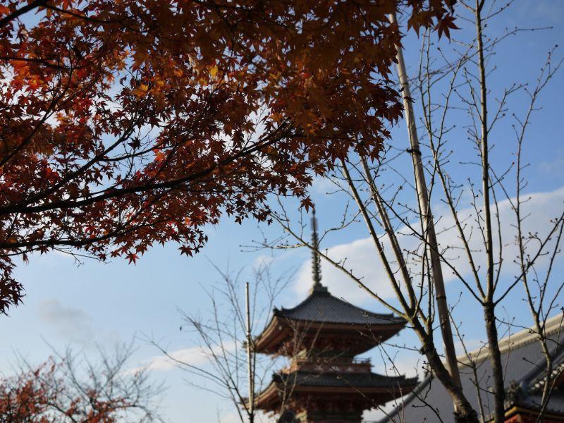 楓葉與清水寺三重塔