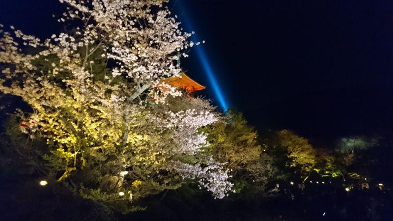 春季夜間參拜