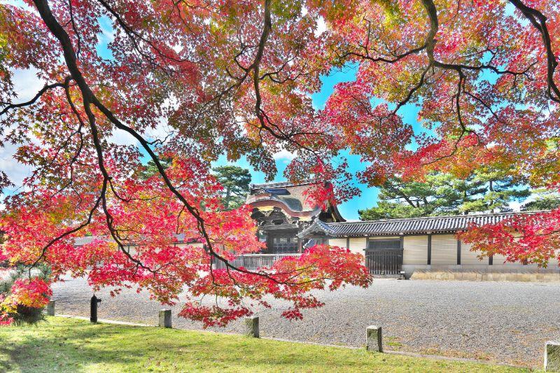 京都御苑的楓葉