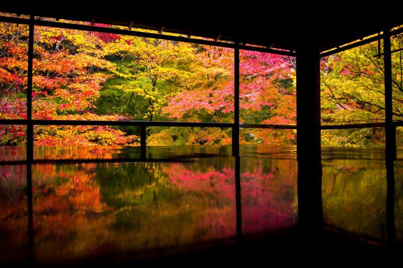 秋天的瑠璃光院楓葉