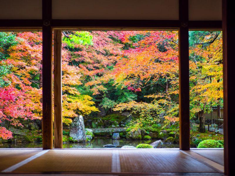 京都洛北蓮華寺的楓葉