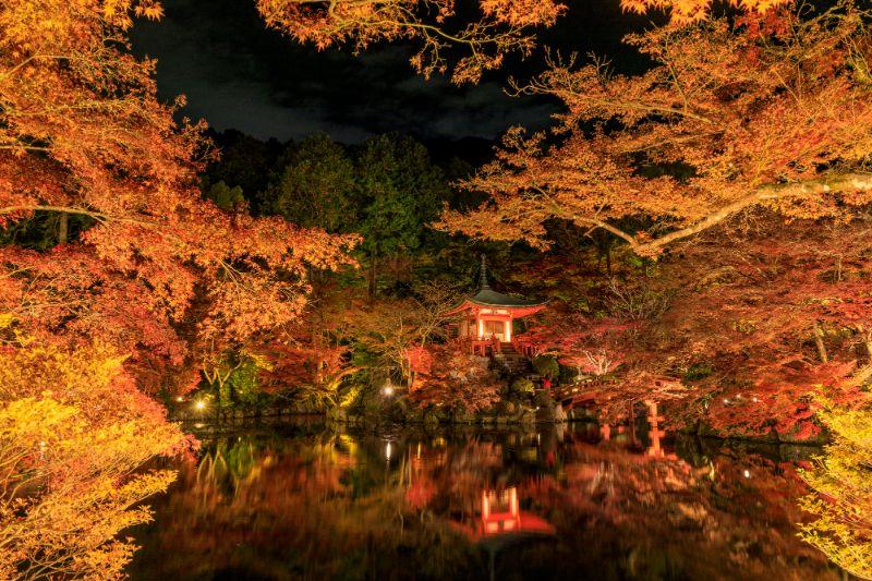 醍醐寺的夜楓