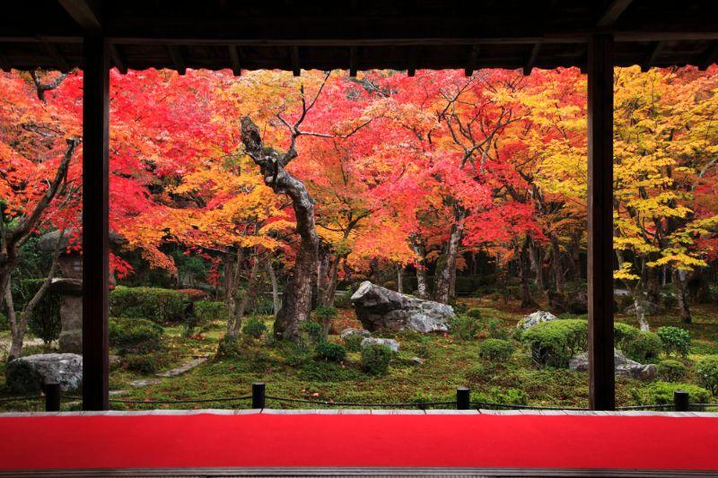 圓光寺十牛之庭的楓葉