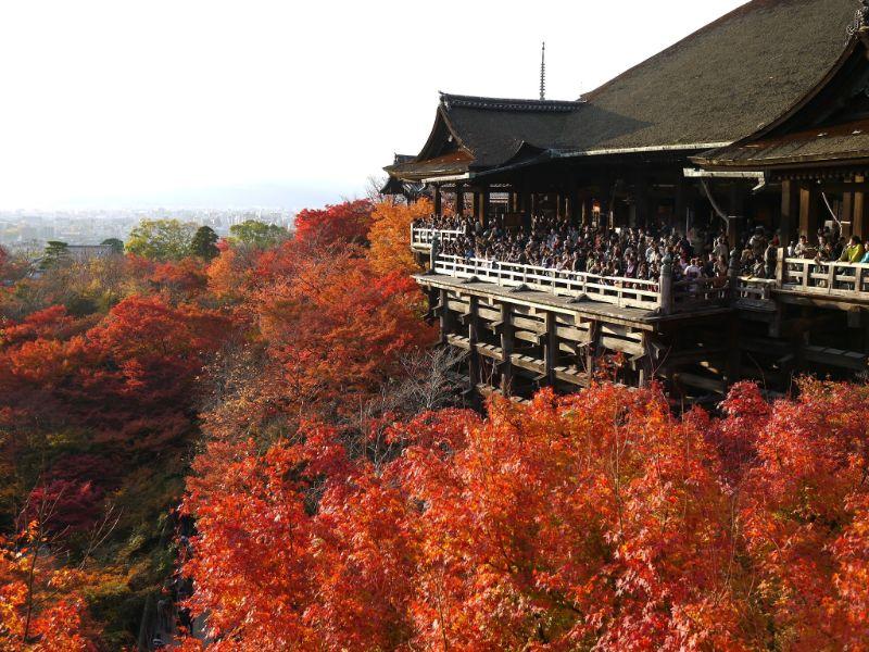 清水寺清水的舞台和楓葉