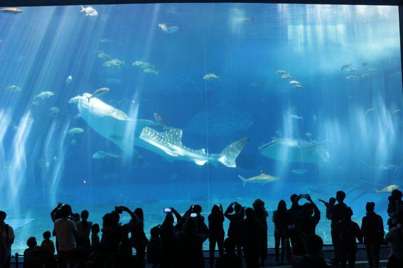 沖繩美麗海水族館大水槽