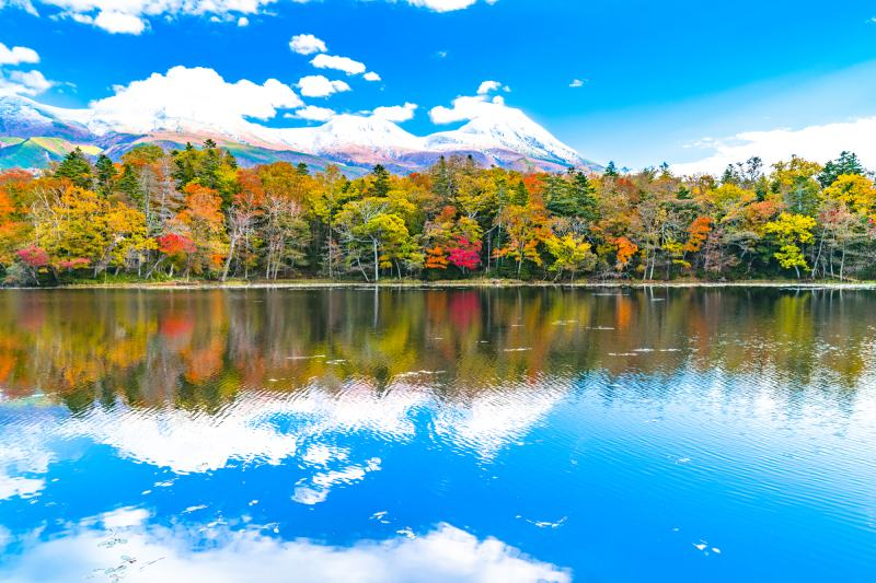 北海道知床五湖秋天楓葉