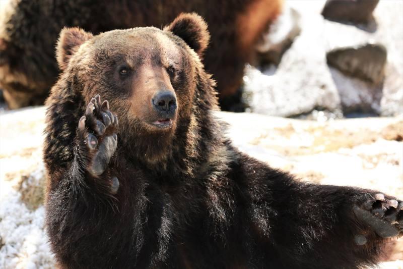 北海道登別熊牧場