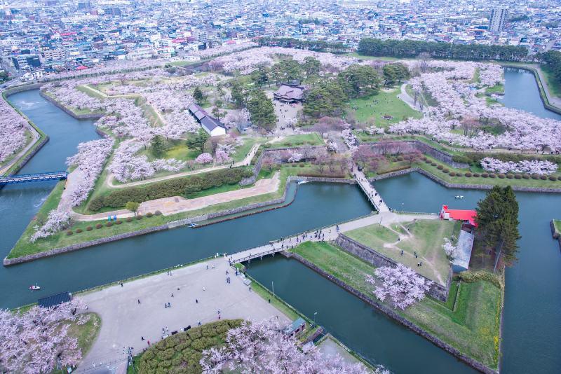 北海道函館五陵郭公園春天櫻花風景