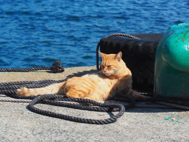 在港口旁隨處可見慵懶的貓咪