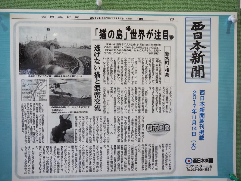 許多新聞都報導過「貓之島」