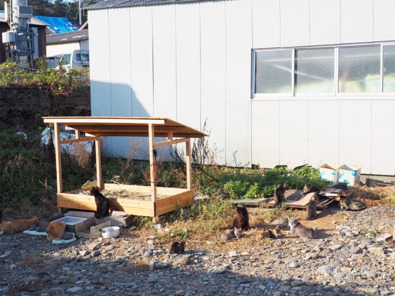 民宅旁的自製貓砂盆旁聚集了許多貓