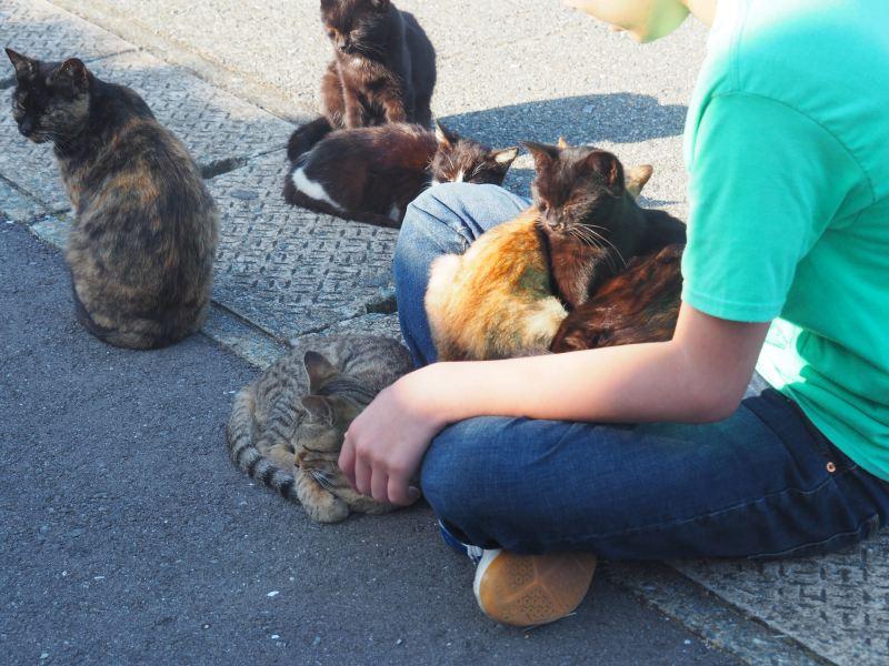 爬上遊客身體睡覺的貓群