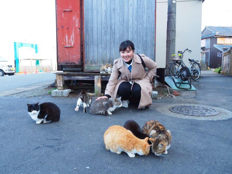 遊客與貓互動