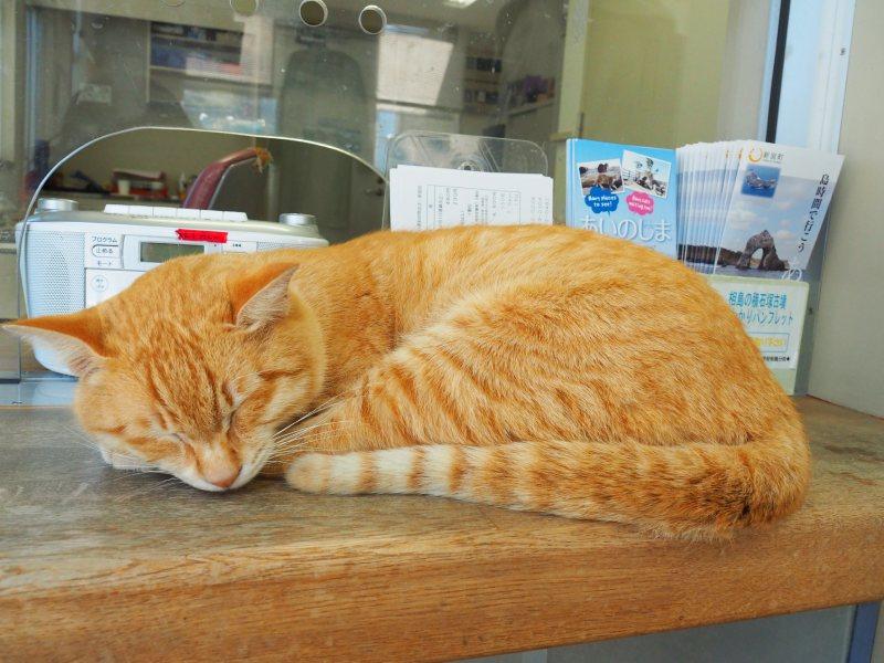 安睡在案內所櫃檯上的橘貓