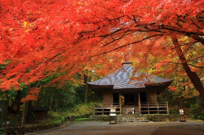 中尊寺的楓葉