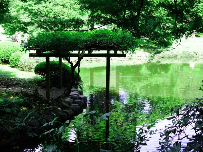 新宿御苑的藤棚