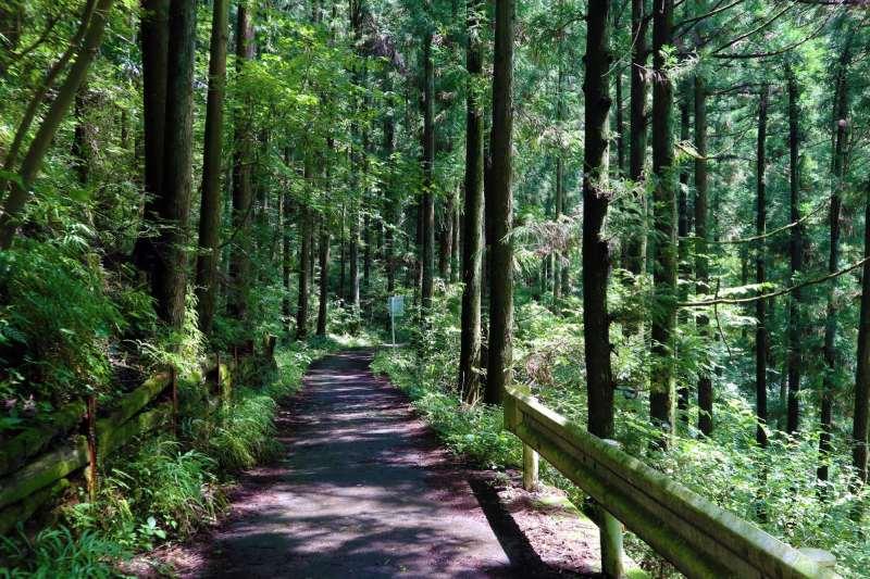 大片森林中的小路充滿著芬多精
