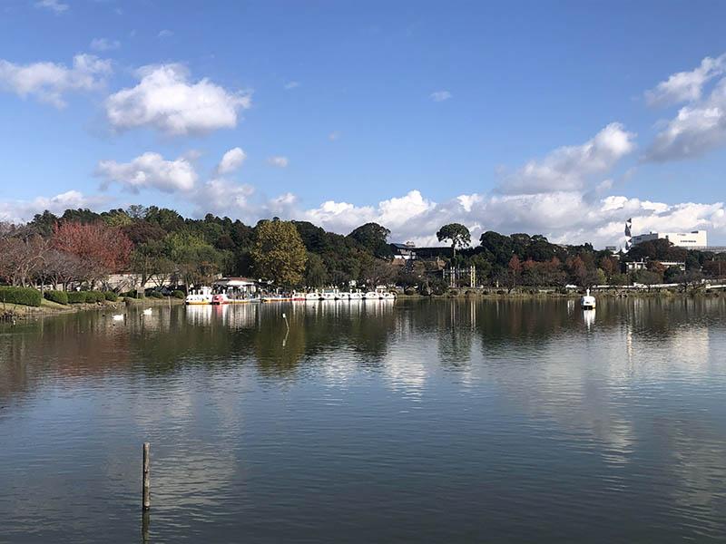 千波湖天鵝船