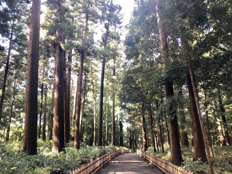 偕樂園杉樹林