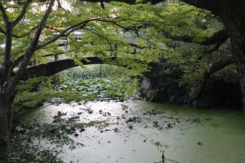 佈滿芙蓉的「血之池」