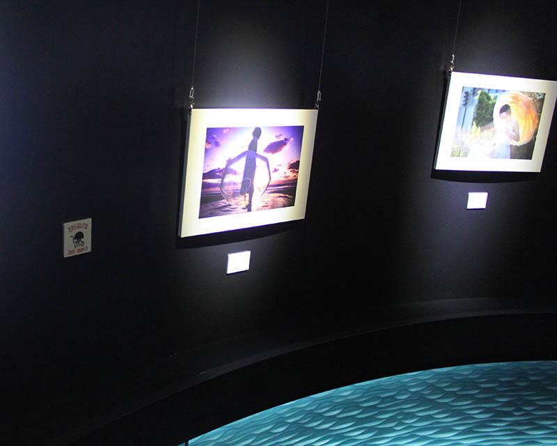 鶴岡市立加茂水族館的水母傘攝影展區