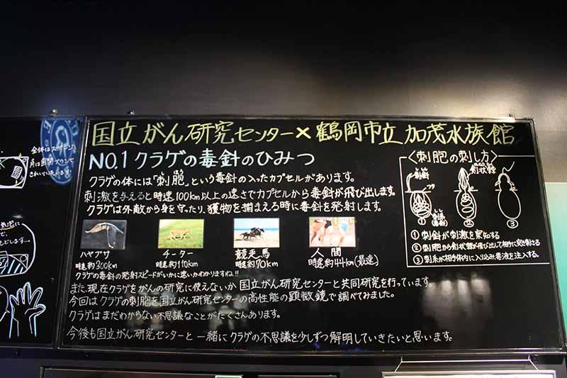 鶴岡市立加茂水族館的水母展區
