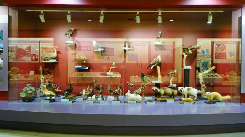 佐渡博物館內的動物標本