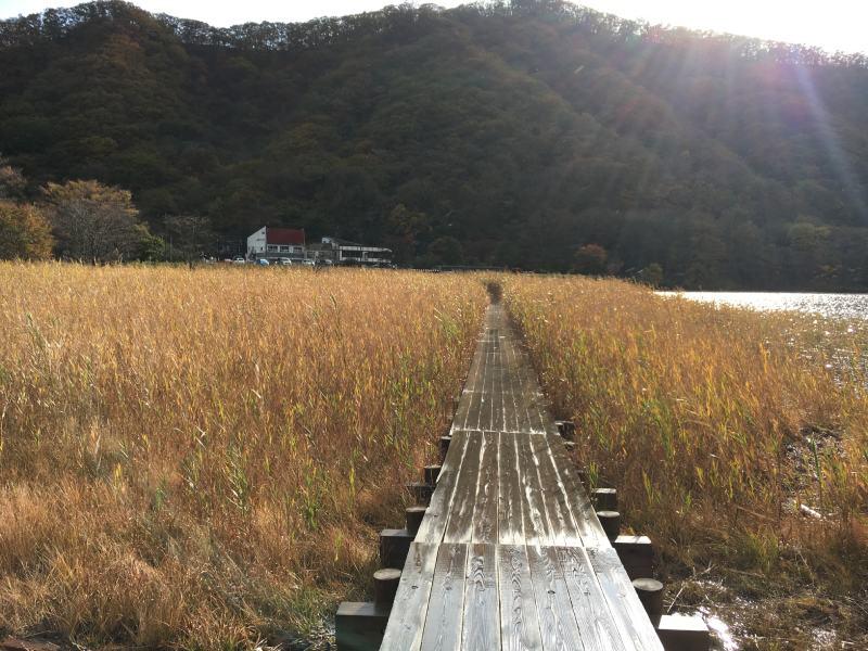 湖邊芒草步道