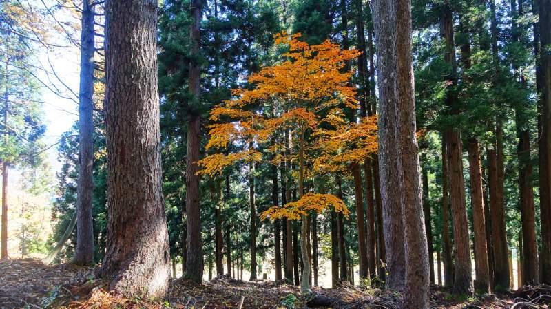 秋天前往三石神社途中的樹林