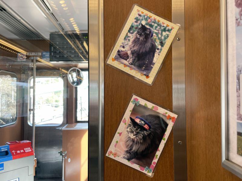 東武快速AIZU Mount Express列車車內的蘆之牧溫泉站貓站長照片