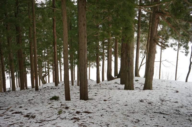 冬天前往三石神社途中的樹林