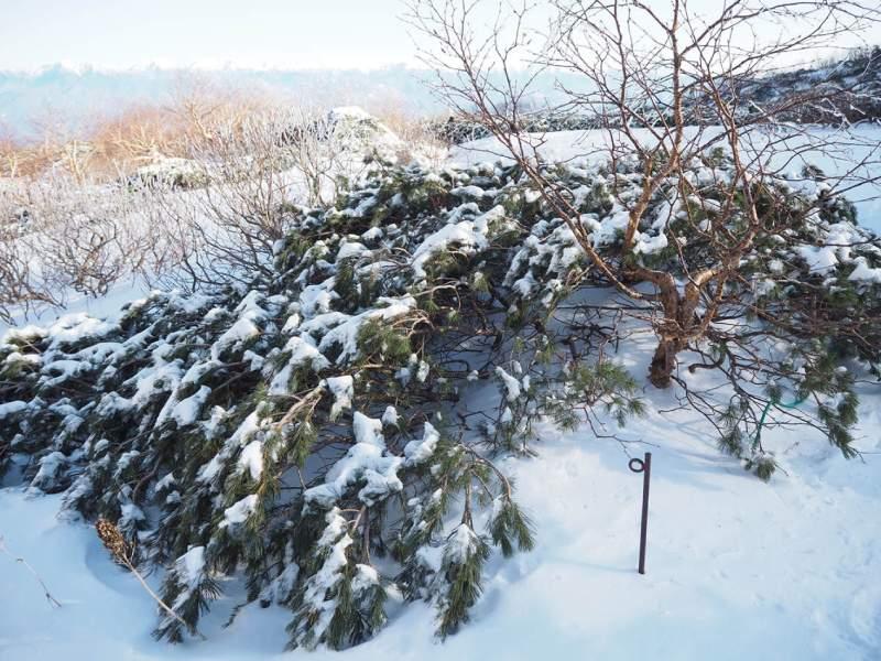 中央阿爾卑斯山的雪景