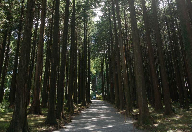 秩父宮紀念公園檜木林