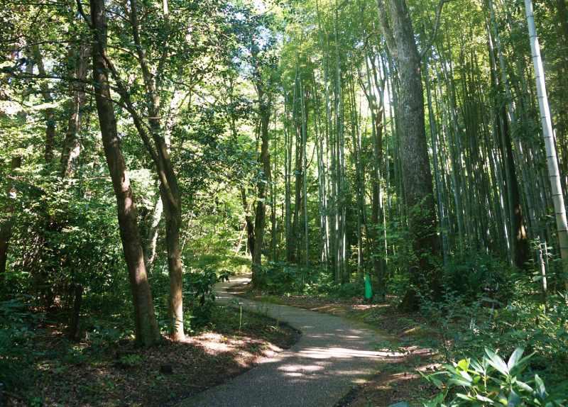 虎屋工房旁的竹林