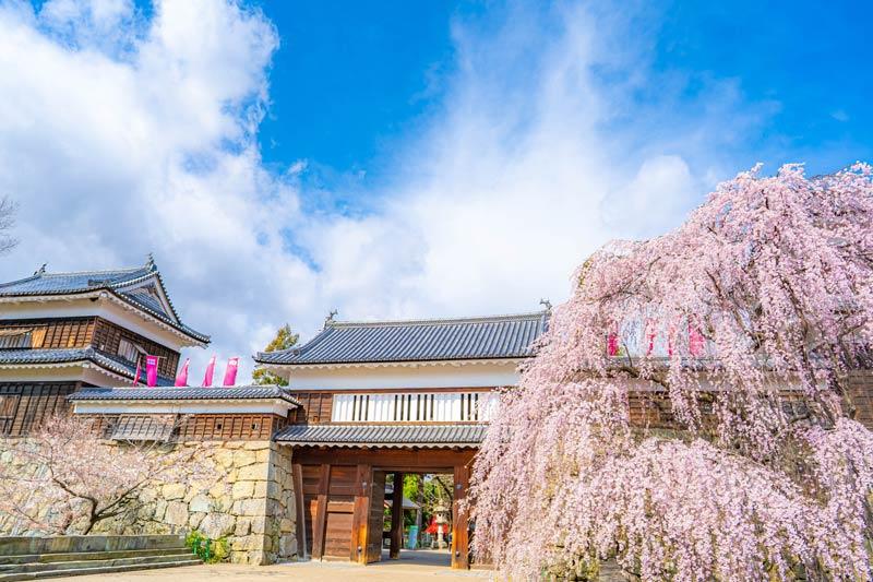 上田城的櫻花