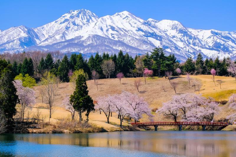 妙高山雪景與松峰的櫻花