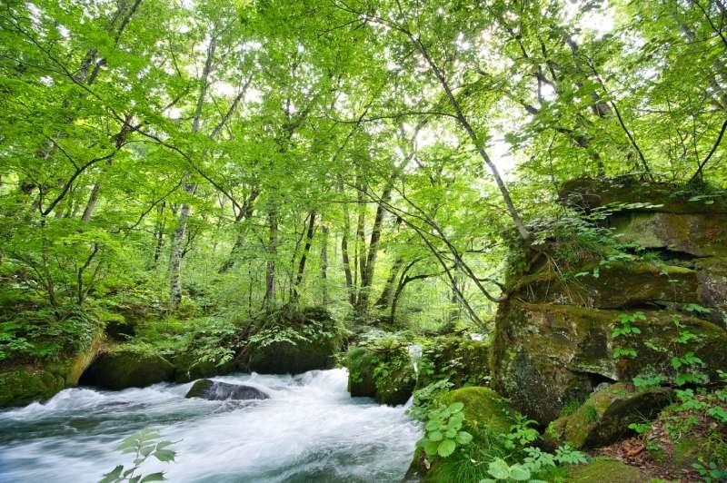 奧入瀨溪流的阿修羅之流景觀